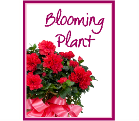Blooming Plant Deal of the Day from Brennan's Florist and Fine Gifts in Jersey City
