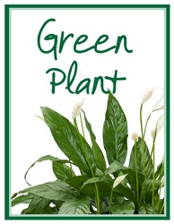 Green Plant Deal of the Day from Brennan's Florist and Fine Gifts in Jersey City