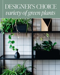 Designer's Choice - Variety of Green Plants from Brennan's Florist and Fine Gifts in Jersey City