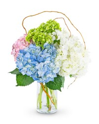 Sweet Hydrangea from Brennan's Florist and Fine Gifts in Jersey City