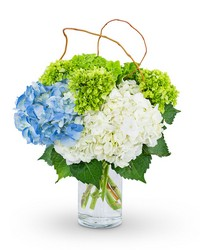 Hydrangea Perfection from Brennan's Florist and Fine Gifts in Jersey City