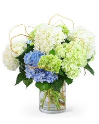 """Hello, Hydrangea!"" from Brennan's Florist and Fine Gifts in Jersey City"
