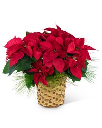 Red Poinsettia Basket from Brennan's Florist and Fine Gifts in Jersey City