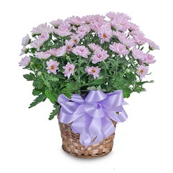 Lavender Chrysanthemum Basket from Brennan's Florist and Fine Gifts in Jersey City