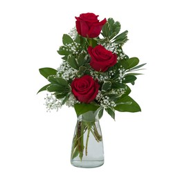 Simply Roses from Brennan's Florist and Fine Gifts in Jersey City