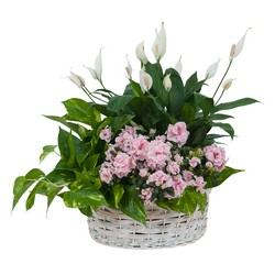 Living Blooming  White Garden Basket  from Brennan's Florist and Fine Gifts in Jersey City