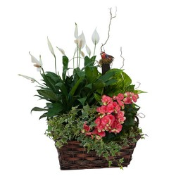 Living Blooming  Garden Basket  from Brennan's Florist and Fine Gifts in Jersey City