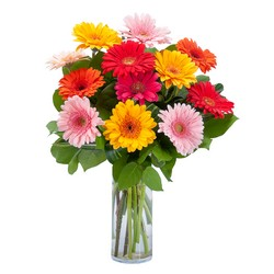 Grand Gerbera from Brennan's Florist and Fine Gifts in Jersey City