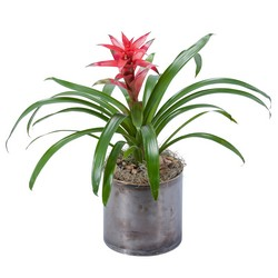 Bromeliad from Brennan's Florist and Fine Gifts in Jersey City