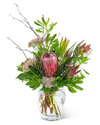 Posh Protea from Brennan's Florist and Fine Gifts in Jersey City