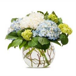 Mighty Hydrangea from Brennan's Florist and Fine Gifts in Jersey City
