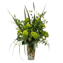 Natural Green from Brennan's Florist and Fine Gifts in Jersey City