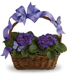 Violets And Butterflies from Brennan's Florist and Fine Gifts in Jersey City