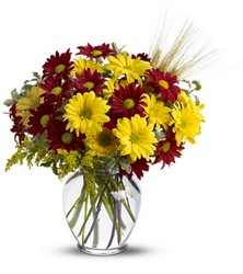 Fall for Daisies from Brennan's Florist and Fine Gifts in Jersey City
